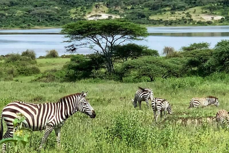Tanzania-travel-to-Tanzania-take-a-safari-in-Tanzania-4-1