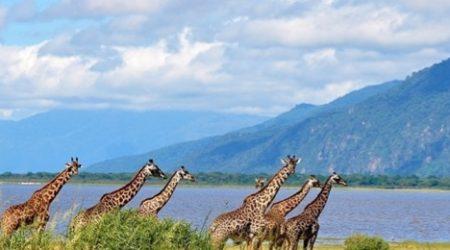 12-Day Grand Wildlife Safari Tanzania, East Africa (4)