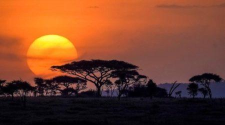 12-Day Grand Wildlife Safari Tanzania, East Africa (5)