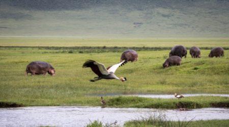 12-Day Grand Wildlife Safari Tanzania, East Africa (6)