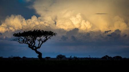 Wildlife & Cultural Immersion Safari book your dream trip (9)
