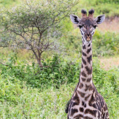 Tanzania travel to Tanzania take a safari in Tanzania (3)