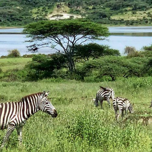 Tanzania travel to Tanzania take a safari in Tanzania (4)