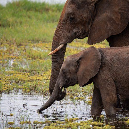african-elephants-you-can-see-on-your-wanderful-tanzania-safari-4.jpg
